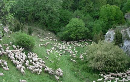 Menu: Lebensräume und Biotope